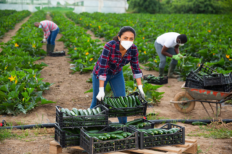 Are Agriculture Workers Exempt from Workers' Compensation Insurance?